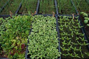 Бизнес выращивания зелени: насколько это выгодно?