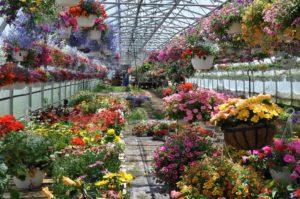 Как начать бизнес по выращиванию цветов в теплице