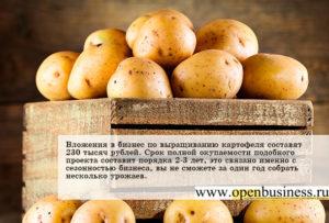 Выращивание картофеля как бизнес: рентабельность, отзывы
