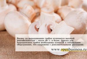 Бизнес выращивания грибов: что для этого необходимо?