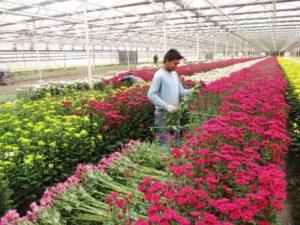 Выращивание цветов как бизнес: все, что для этого нужно